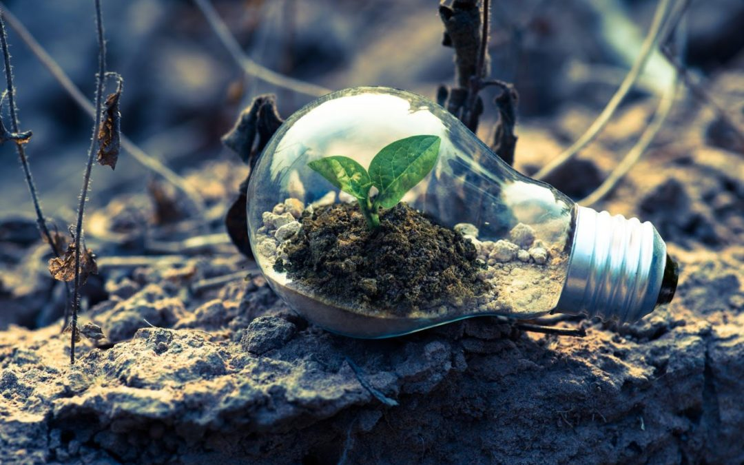 Understanding South Africa's National Environmental Management Act